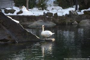 Что посмотреть в Ялте зимой